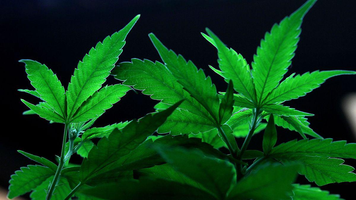 California Lawmakers Purchase Marijuana Using Cryptocurrency